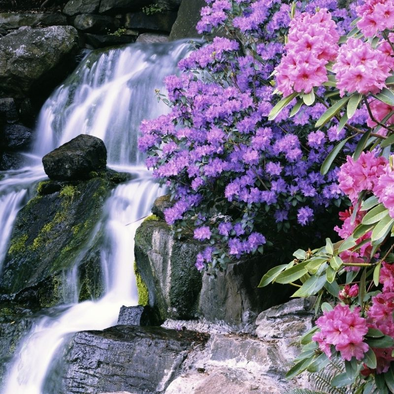 10 Best Waterfall And Flowers Wallpaper FULL HD 1080p For PC Desktop 2018 free download most beautiful waterfalls with flowers download 1920x1080 flowers 800x800