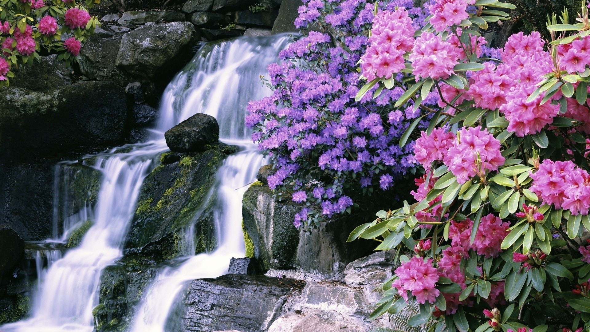 most beautiful waterfalls with flowers | download 1920x1080 flowers