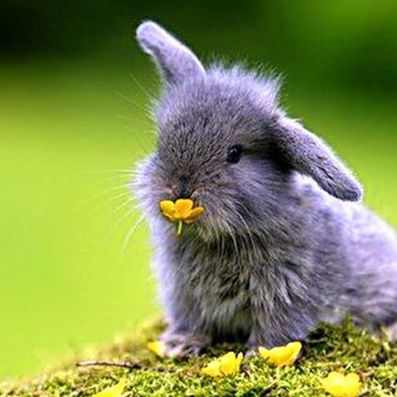 10 Most Popular Cute Baby Bunny Images FULL HD 1920×1080 For PC Desktop 2021 free download most funny and cute baby bunnies compilation 2017 youtube 800x800