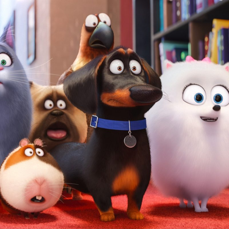 10 Most Popular The Secret Life Of Pets Wallpaper FULL HD 1920×1080 For PC Desktop 2021 free download movies the secret life of pets wallpapers desktop phone tablet 800x800