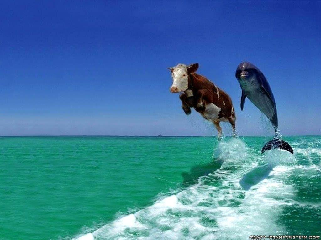 10 most popular funny animal desktop wallpaper full hd 1080p for pc