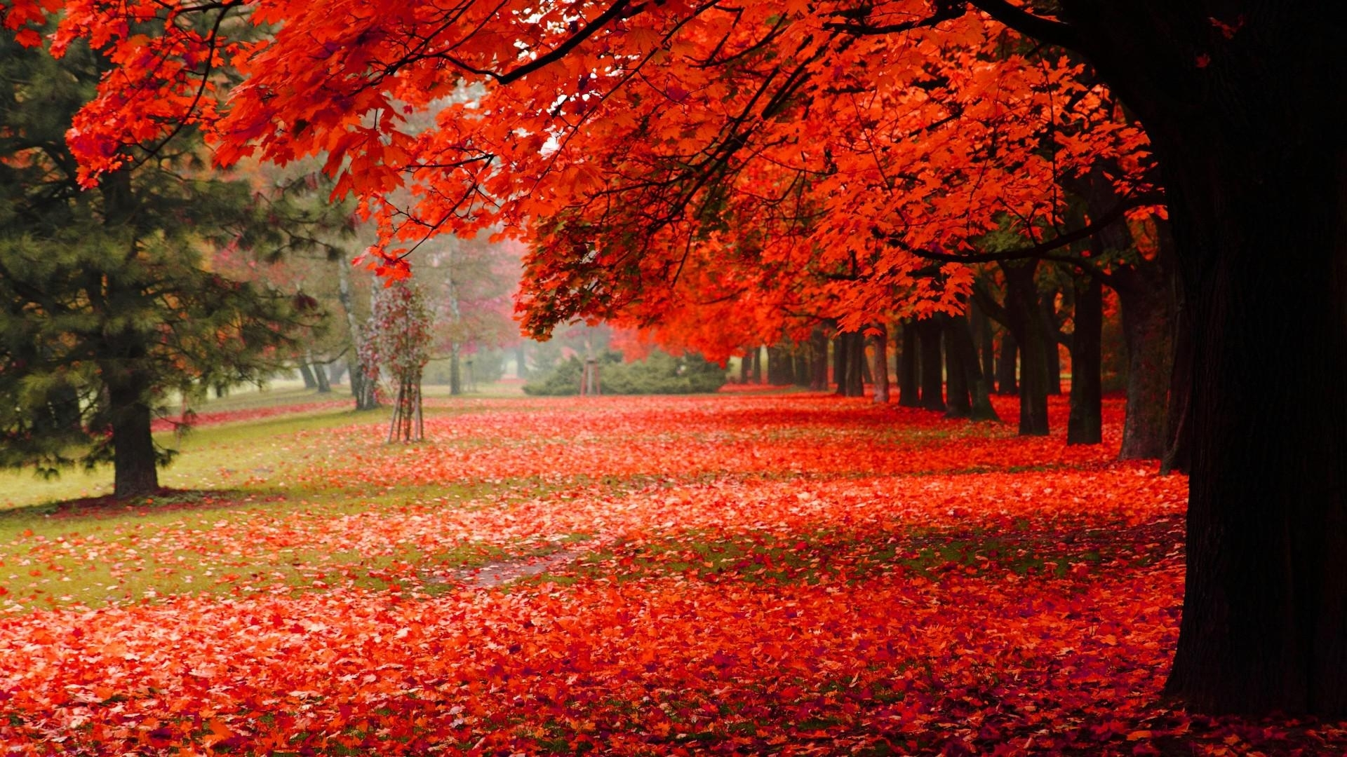 natural, park, autumn, red leaves, autumn scenery hd free desktop