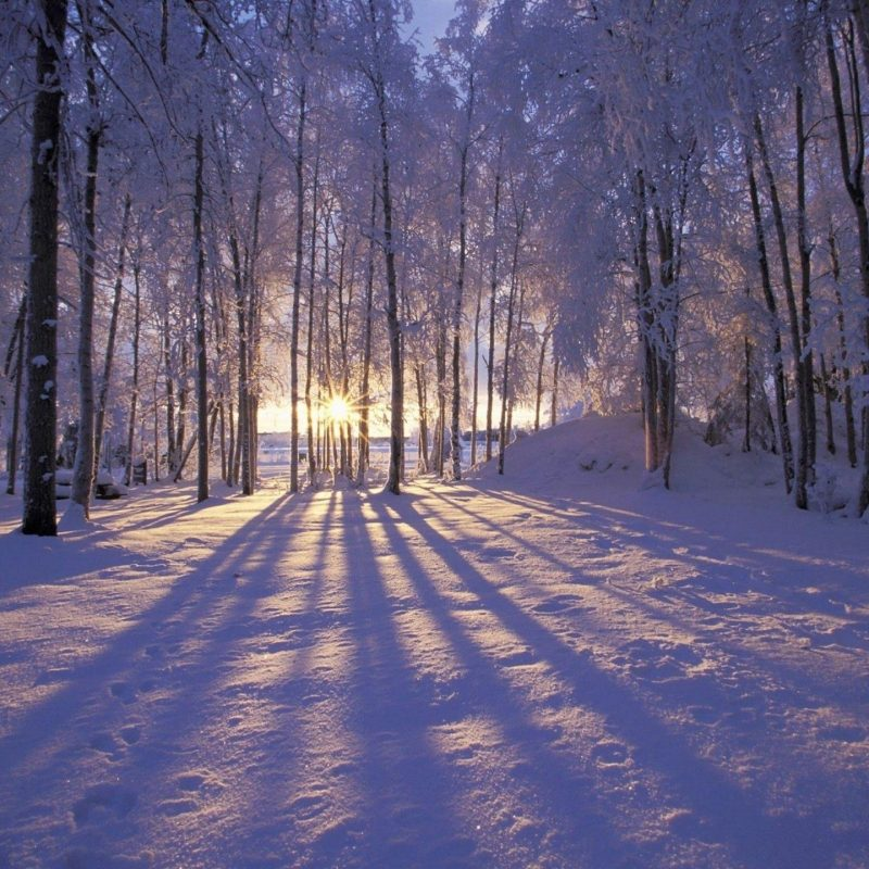 10 Most Popular Winter Wonderland Wallpaper Desktop FULL HD 1080p For PC Background 2018 free download nature landscape winter wonderland wallpapers desktop phone 1 800x800