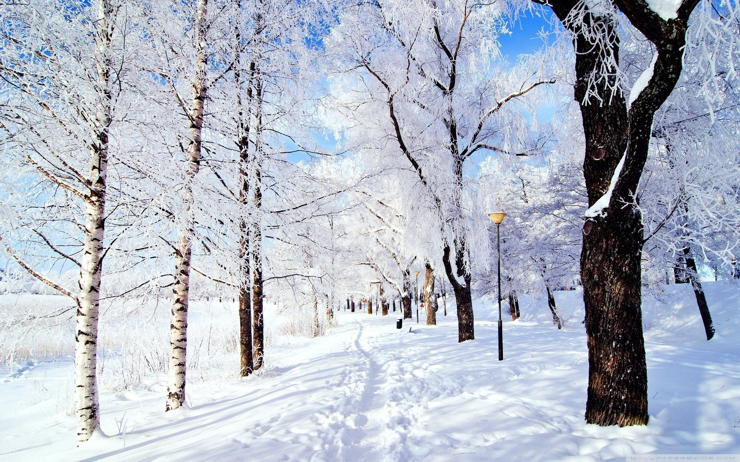 nature & landscape winter wonderland wallpapers (desktop, phone