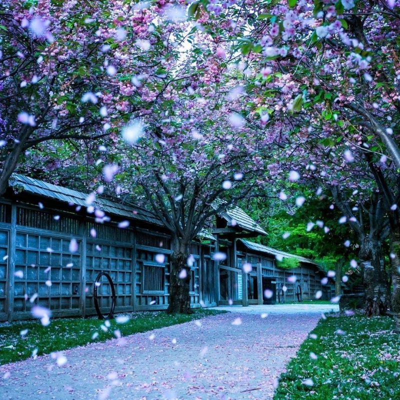 10 New Beautiful Nature Wallpaper Spring FULL HD 1080p For PC Desktop 2018 free download nature spring 6906 hdwarena 800x800