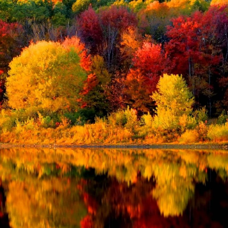 10 Top New England Fall Foliage Wallpaper FULL HD 1920×1080 For PC Background 2018 free download new england fall wallpapers wallpaper cave 800x800