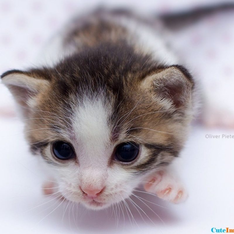 10 New Cute Baby Kitten Pics FULL HD 1920×1080 For PC Background 2018 free download newborn kitten wallpaper cuteimages 800x800