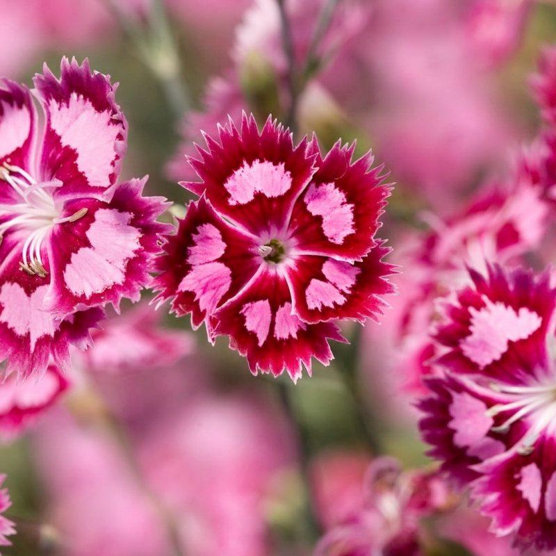 10 Top Beautiful Flower Wallpapers For Desktop Full Screen Full Hd
