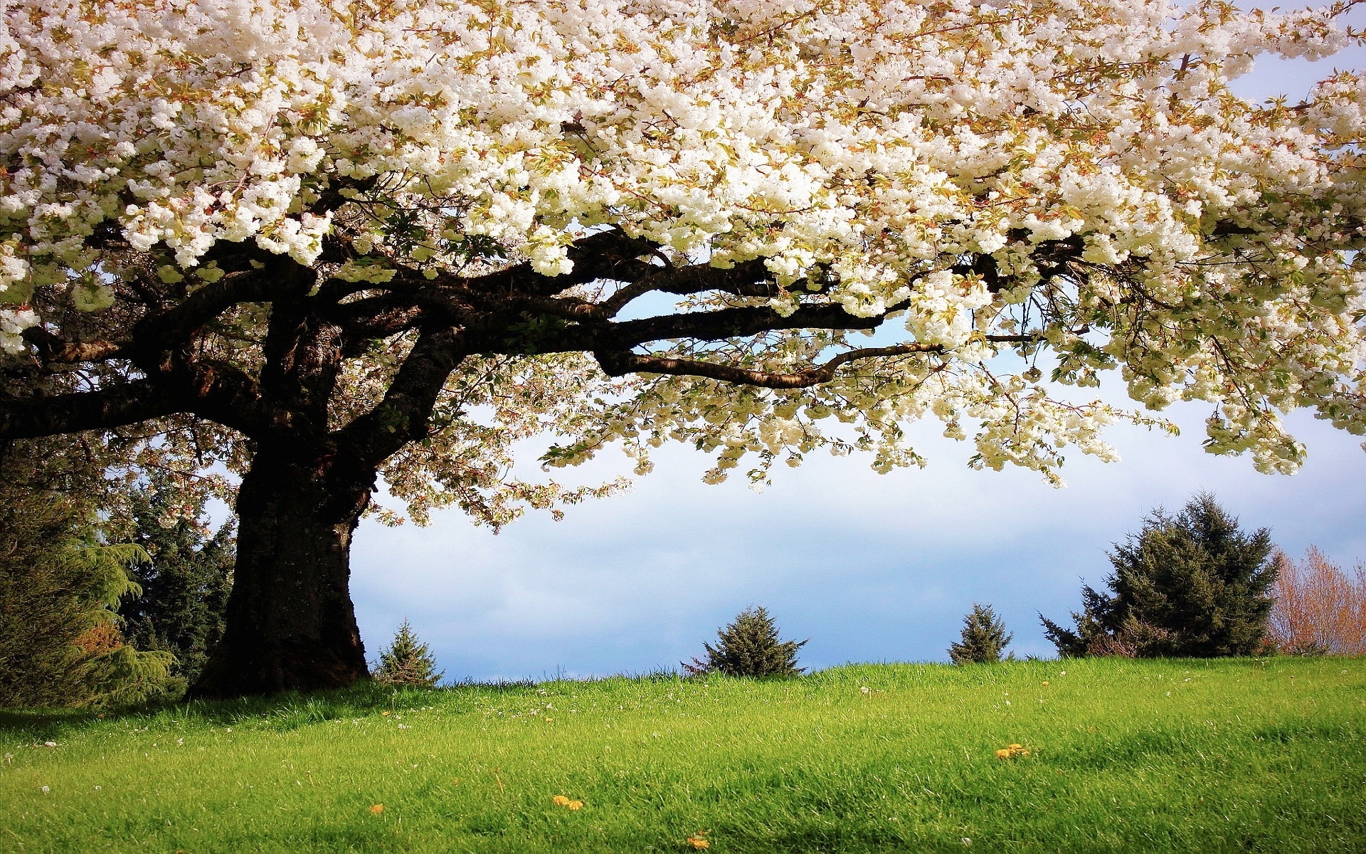 nice hd wallpapers from landscapes in the spring season