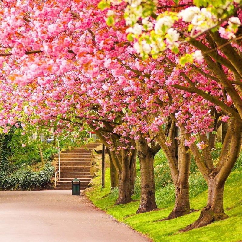 10 Latest Spring Season Wallpaper Hd FULL HD 1080p For PC Desktop 2018 free download nice hd wallpapers from landscapes in the spring season 4 800x800