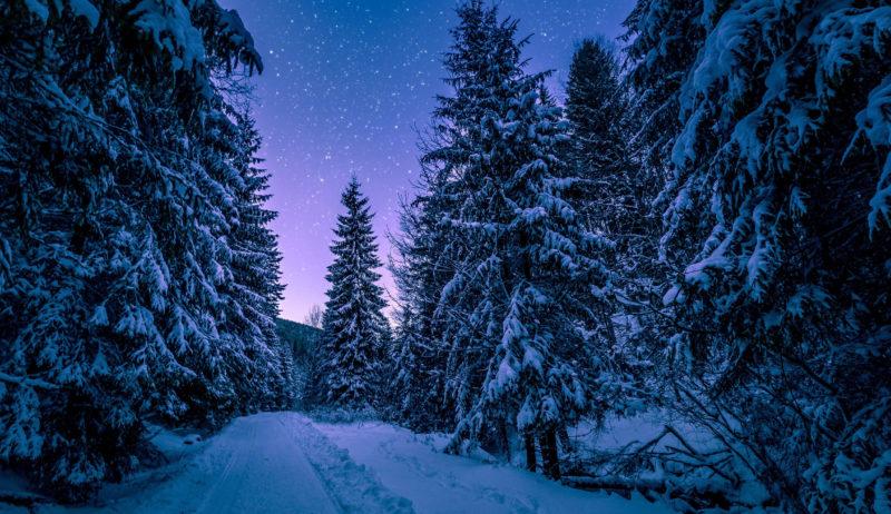 10 Most Popular Night Forest Wallpaper FULL HD 1920×1080 For PC Desktop 2020 free download night forest wallpapers hd download free 800x462