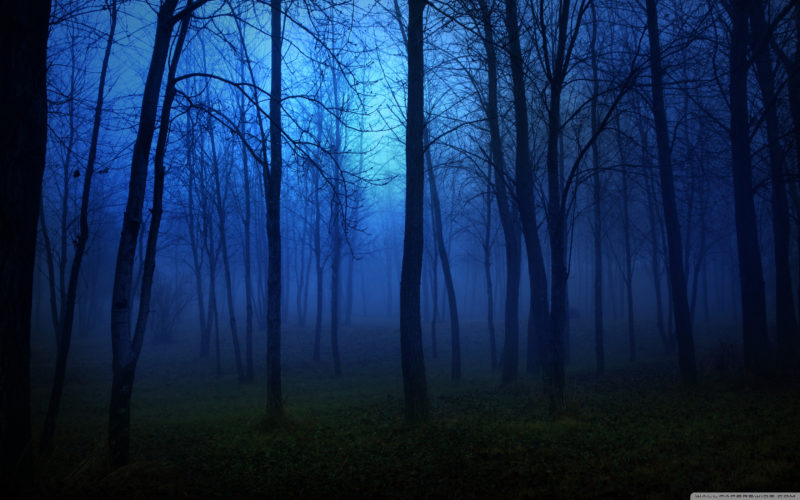 10 Most Popular Night Forest Wallpaper FULL HD 1920×1080 For PC Desktop 2020 free download night in the forest e29da4 4k hd desktop wallpaper for e280a2 dual monitor 800x500