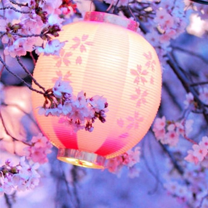 10 Latest Cherry Blossom Wallpaper Iphone FULL HD 1920×1080 For PC Desktop 2020 free download night lantern flower trees iphone 6 plus wallpaper iphone 6 1 800x800