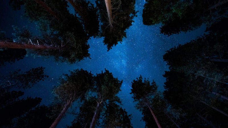 10 Most Popular Night Forest Wallpaper FULL HD 1920×1080 For PC Desktop 2020 free download night view from forest wallpaper wallpaper stream 800x450