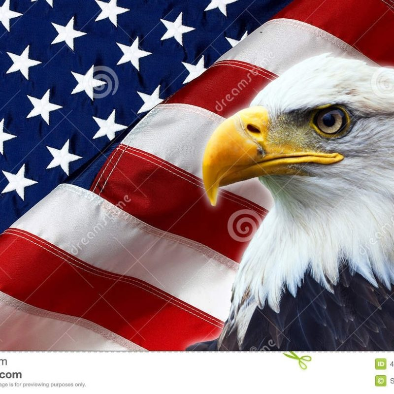 10 Most Popular American Flag Eagle Background FULL HD 1080p For PC Background 2018 free download north american bald eagle on american flag stock photo image of 800x800