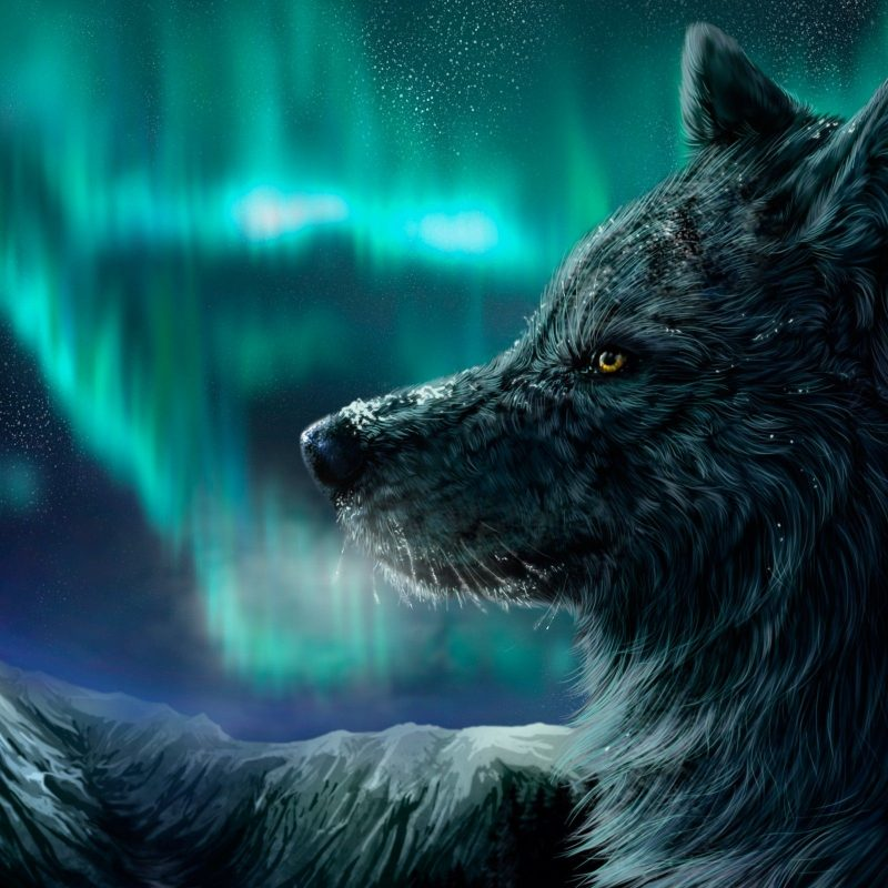 10 Latest Cool Wolf Backgrounds Light FULL HD 1920×1080 For PC Background 2018 free download northern lights wolf http www 0wallpapers 1784 northern 800x800