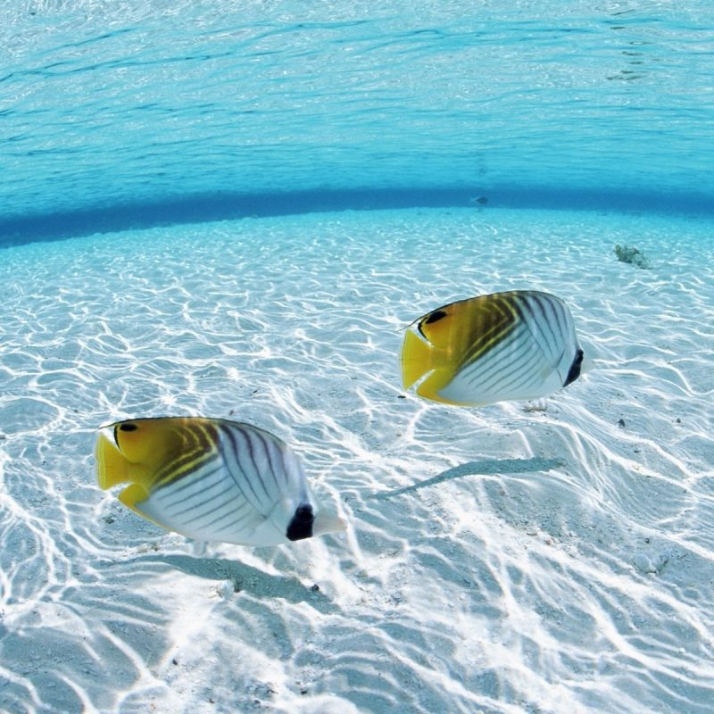 10 Top Desktop Wallpaper Hd Ocean FULL HD 1080p For PC Desktop 2020 free download ocean fish wallpaper hd wallpaper wiki 800x800