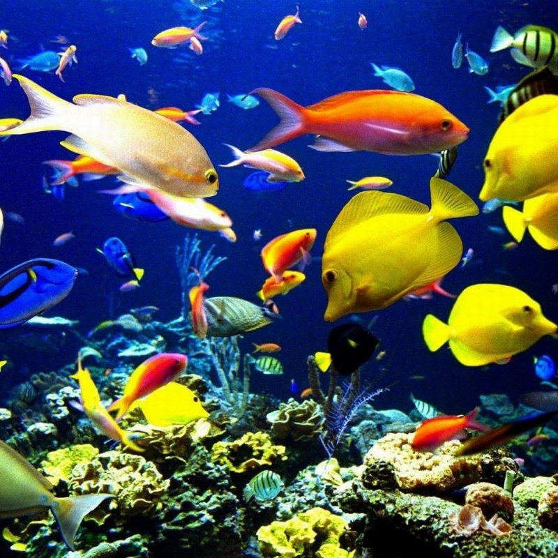 10 Latest Desktop Backgrounds Ocean Life FULL HD 1920×1080 For PC Background 2018 free download ocean life background 1 oceans pinterest ocean 800x800