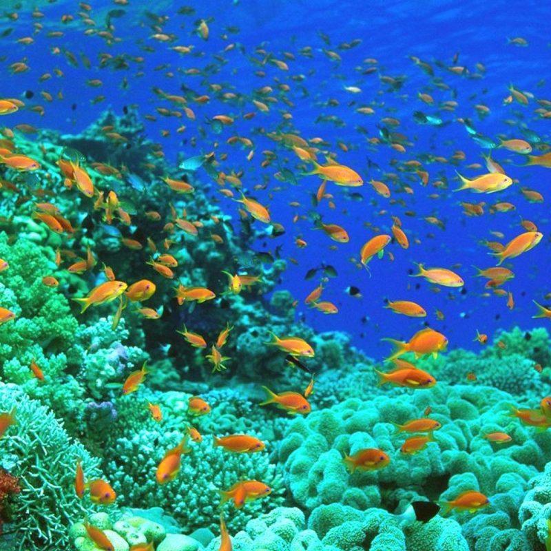 10 Latest Desktop Backgrounds Ocean Life FULL HD 1920×1080 For PC Background 2018 free download ocean life desktop wallpaper 1920x1080 ocean life backgrounds 52 1 800x800