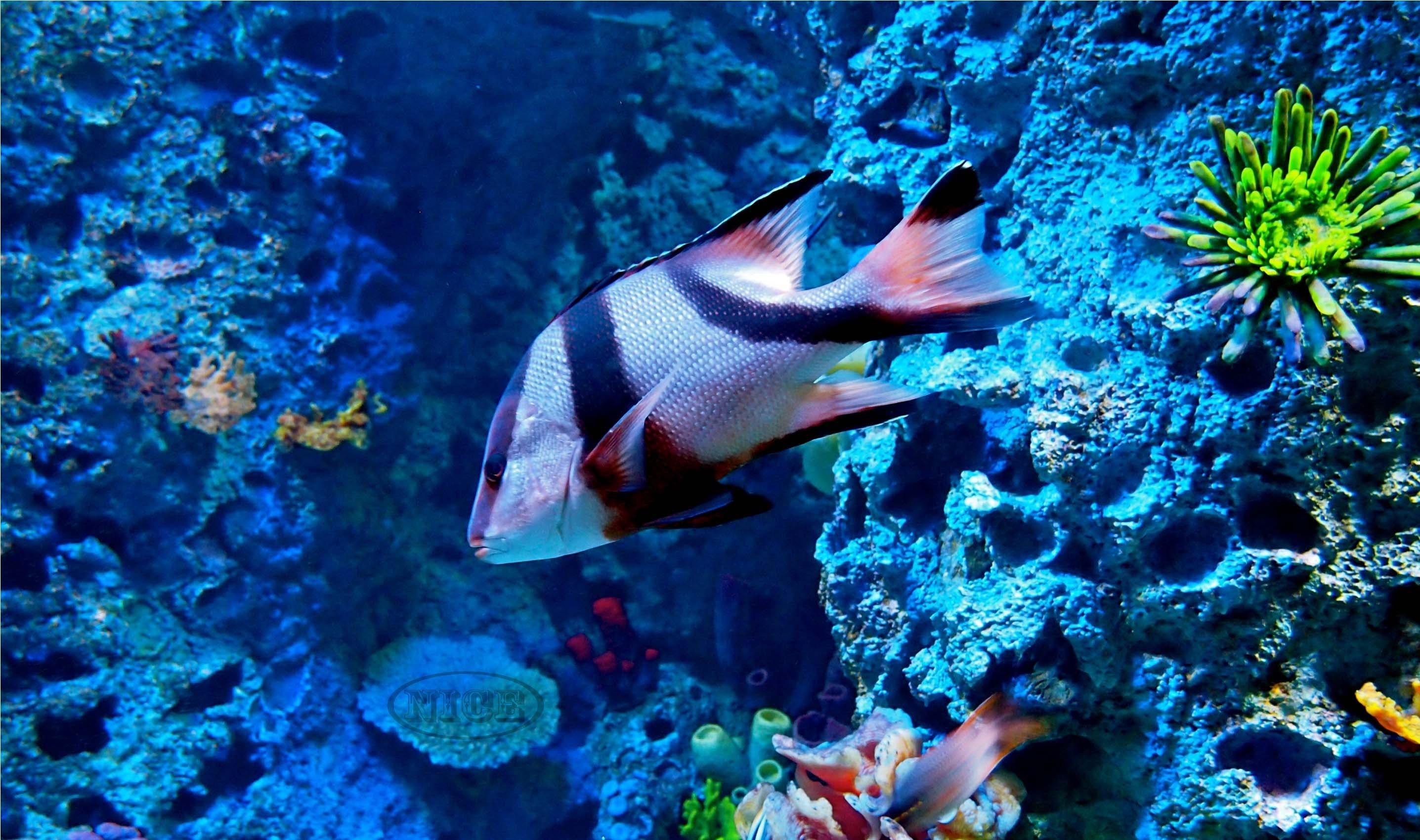 ocean life wallpapers - wallpaper cave