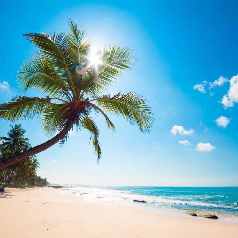 10 New Beach Palm Tree Background FULL HD 1080p For PC Background 2020 free download ocean palm trees beach shore nature pinterest palm trees beach 800x800