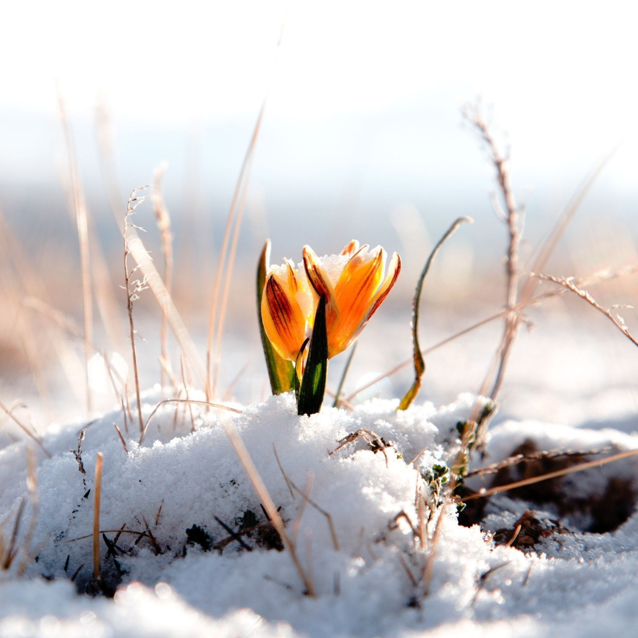 orange flower snow - tap to see more beautiful winter snow flowers