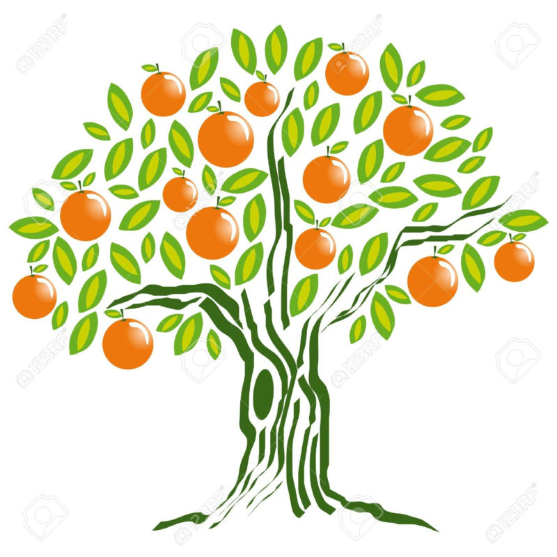 10 Best Orange Tree Pictures FULL HD 1080p For PC Background 2018 free download orange tree royalty free cliparts vectors and stock illustration 800x800