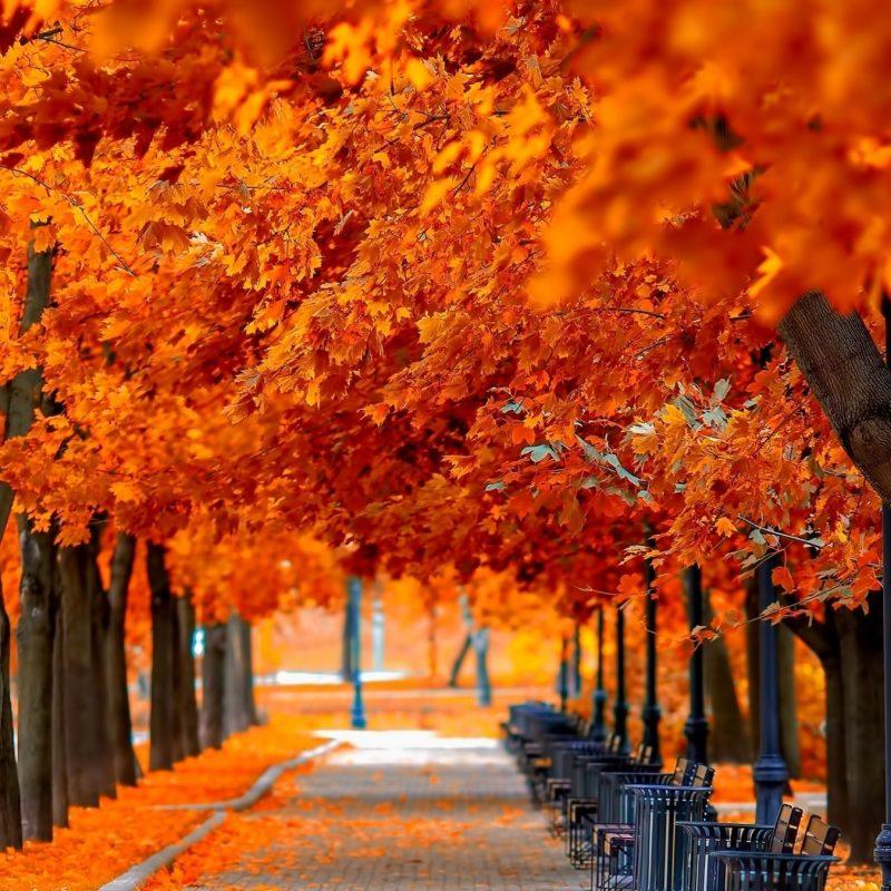 10 New Fall Trees Wallpaper Hd FULL HD 1920×1080 For PC Background 2018 free download orange trees fall e29da4 4k hd desktop wallpaper for 4k ultra hd tv 800x800