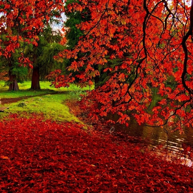 10 New Fall Leaves Desktop Backgrounds FULL HD 1080p For PC Background 2018 free download other vibrant fall foliage park lake bench trees red leaves desktop 800x800