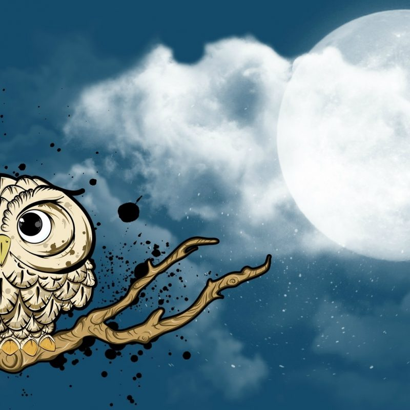 10 New Owl Backgrounds For Computer FULL HD 1920×1080 For PC Desktop 2021 free download owl wallpaper and background image 1680x1013 id182487 800x800