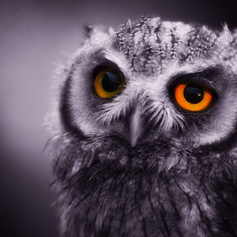 10 New Owl Backgrounds For Computer FULL HD 1920×1080 For PC Desktop 2021 free download owl wallpaper for computer 65 images 800x800