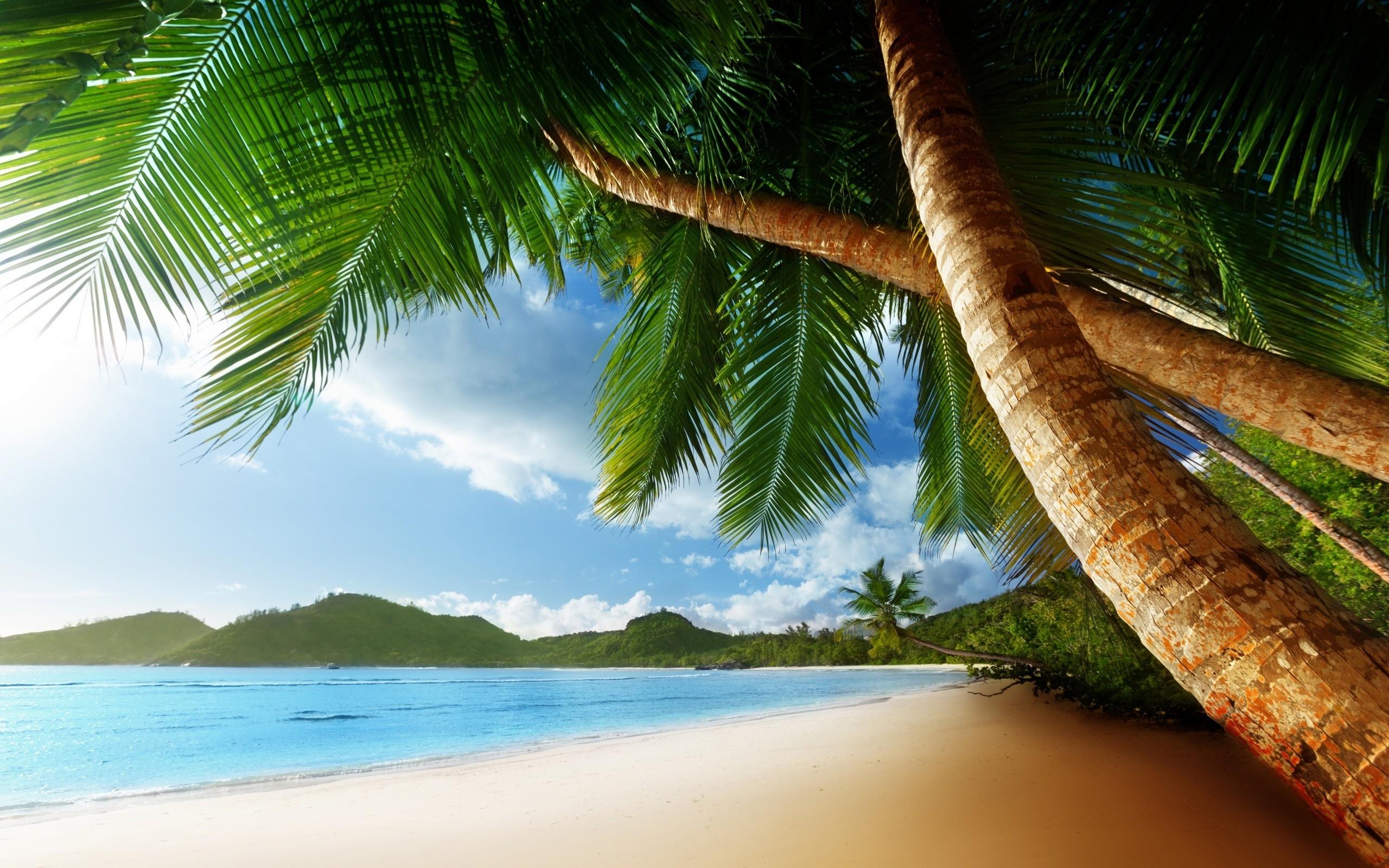 palm tree background 22011 2560x1600 px ~ hdwallsource