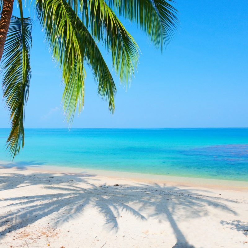 10 New Beach Palm Tree Background FULL HD 1080p For PC Background 2020 free download palm tree background c2b7e291a0 download free hd backgrounds for desktop 800x800