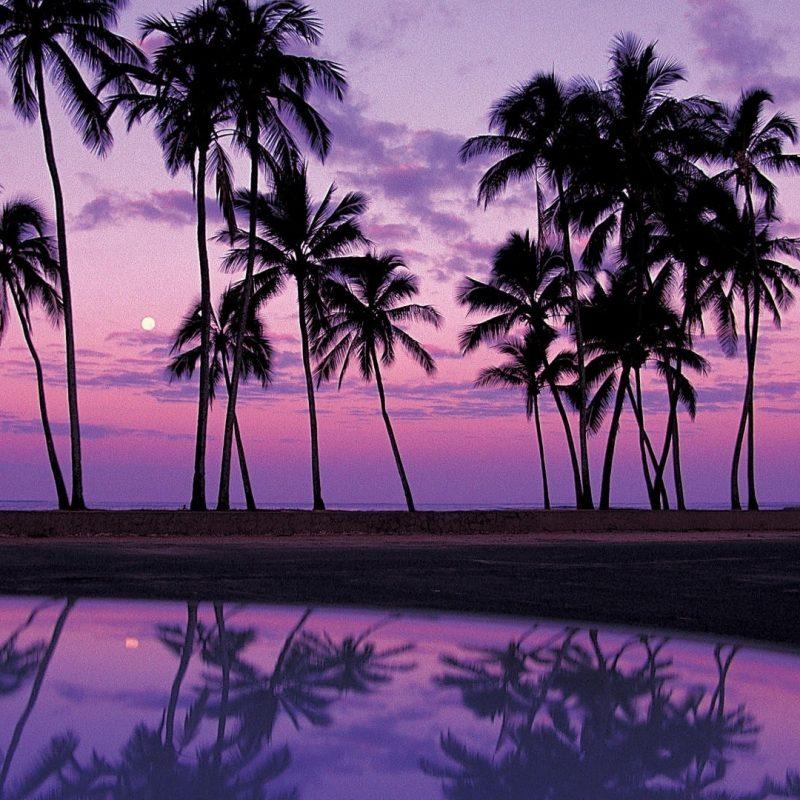 10 Best Palm Trees Desktop Wallpaper FULL HD 1080p For PC Desktop 2018 free download palm tree backgrounds pixelstalk 800x800