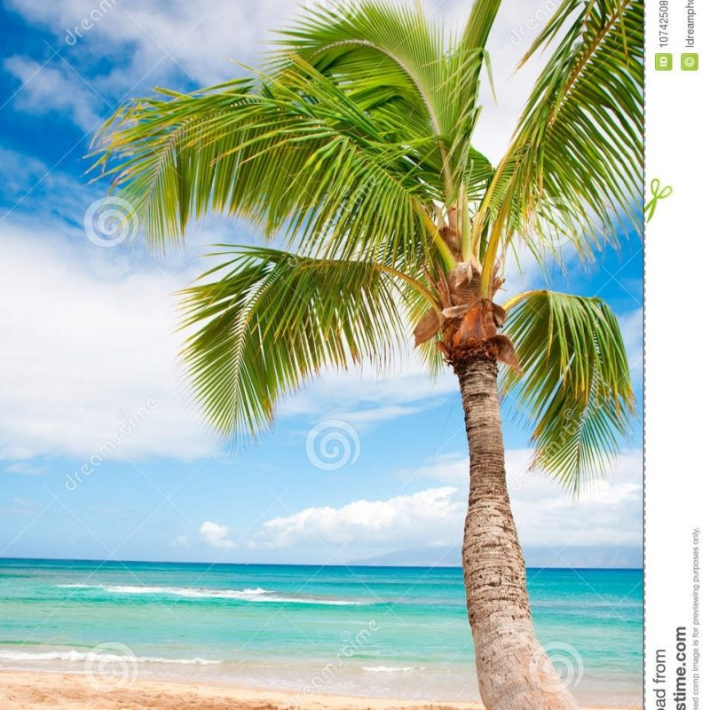 10 Most Popular Beach And Palm Trees Background FULL HD 1920×1080 For PC Desktop 2018 free download palm tree beach background stock photo image of beautiful 10742508 1 800x800
