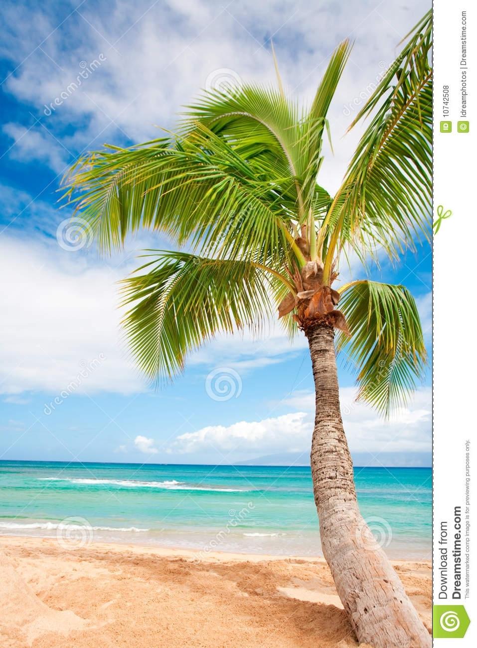 palm tree beach background stock photo. image of beautiful - 10742508