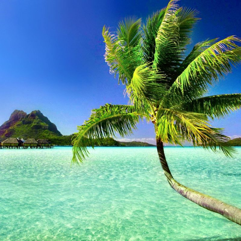 10 Most Popular Beach And Palm Trees Background FULL HD 1920×1080 For PC Desktop 2018 free download palm tree beach wallpapers wallpaper cave 1 800x800