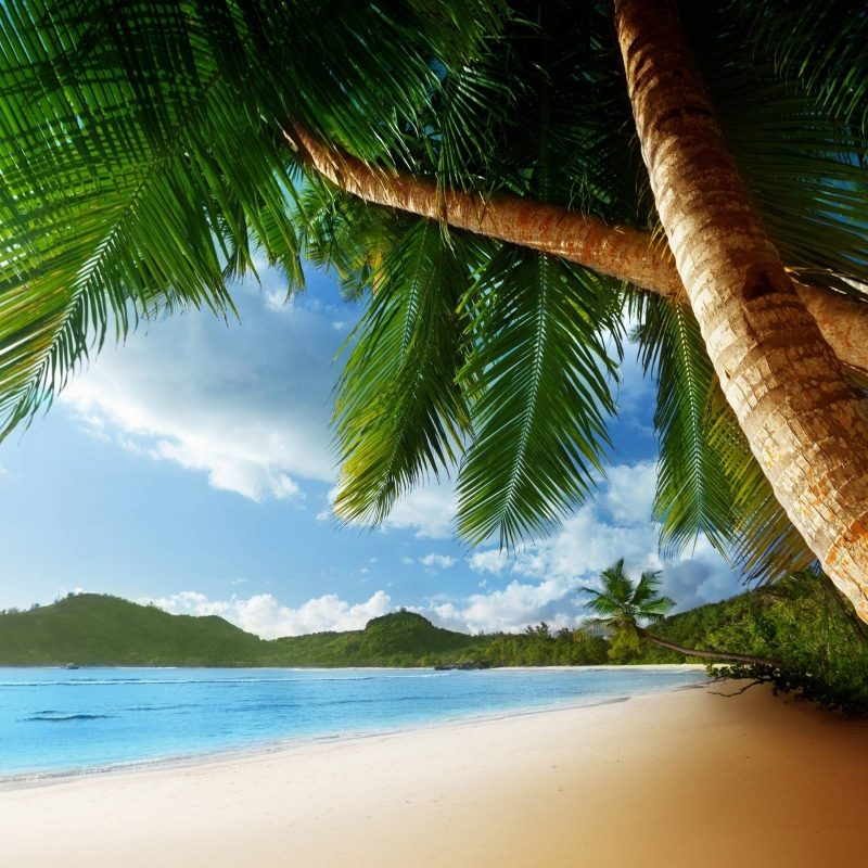 10 Top Beach And Palm Tree Wallpaper FULL HD 1920×1080 For PC Background 2018 free download palm tree beach wallpapers wallpaper cave 2 800x800