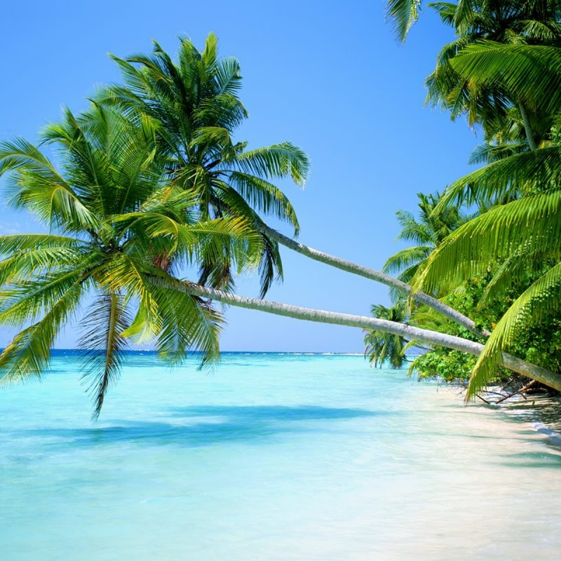10 Top Beach And Palm Tree Wallpaper FULL HD 1920×1080 For PC Background 2021 free download palm tree beaches sand sea wallpapers 800x800