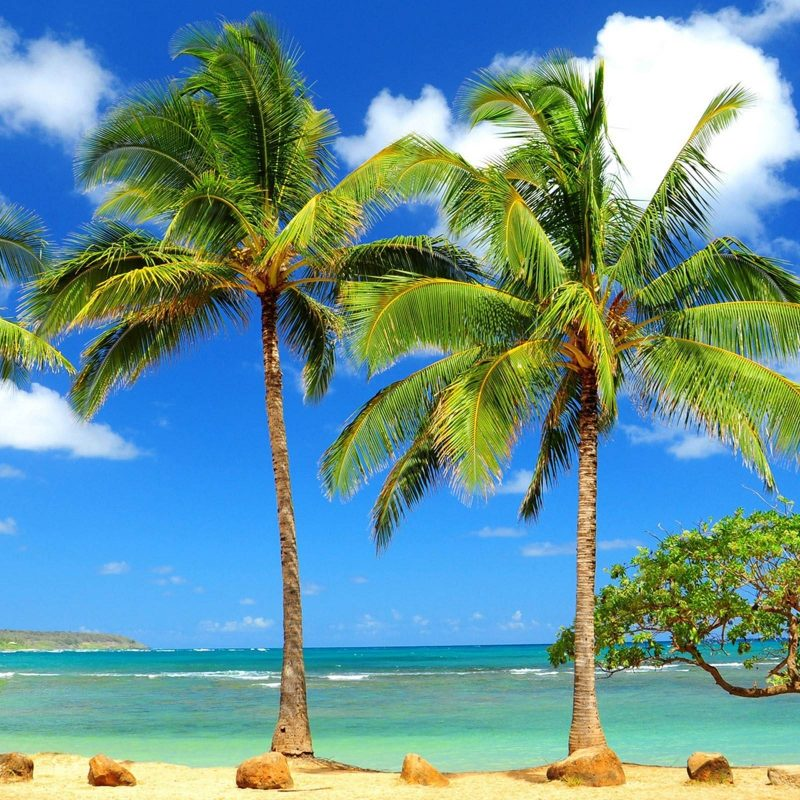 10 Most Popular Beach And Palm Trees Background FULL HD 1920×1080 For PC Desktop 2018 free download palm tree wallpapers wallpaper cave 2 800x800