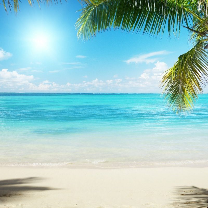 10 Most Popular Beach And Palm Trees Background FULL HD 1920×1080 For PC Desktop 2018 free download palm trees beach google search painting pinterest palm trees 1 800x800