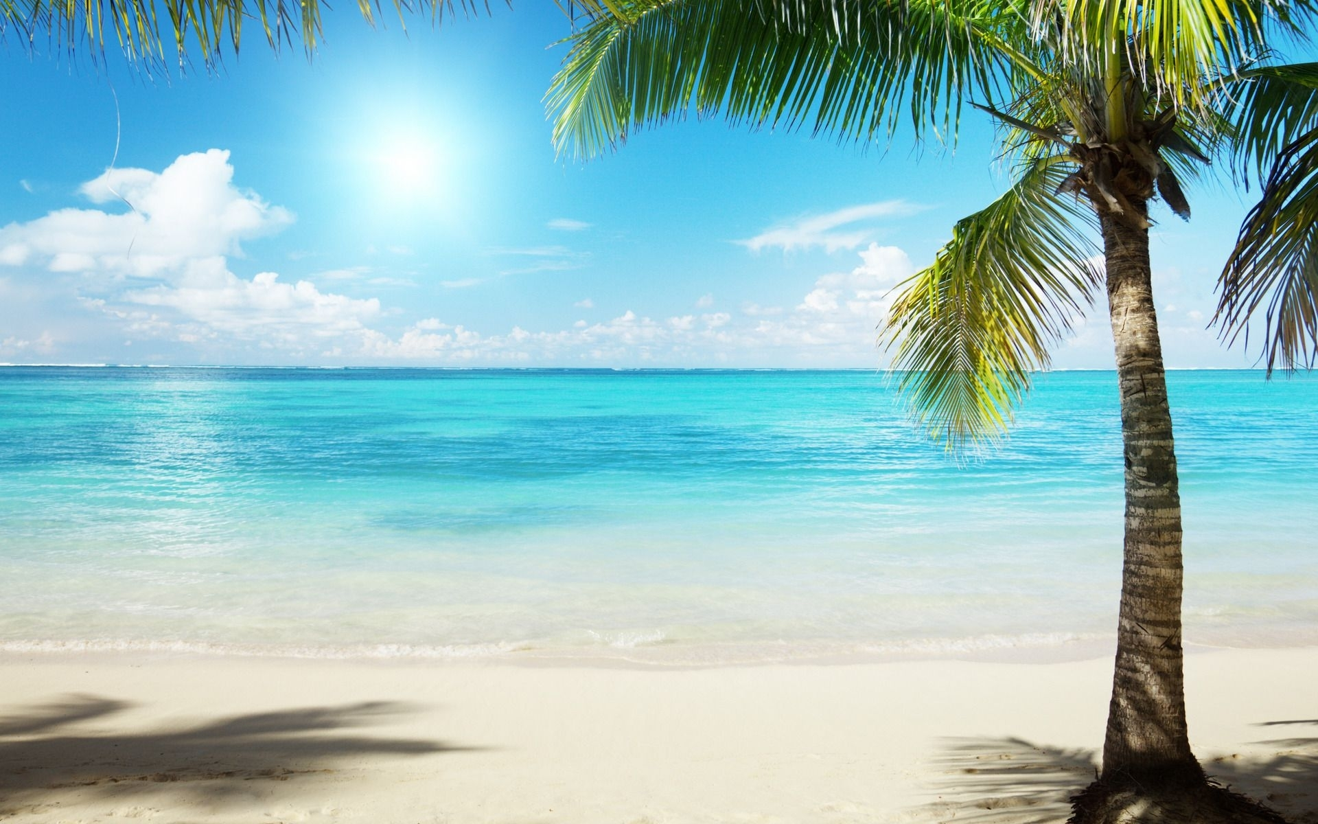 palm trees beach - google search | painting | pinterest | palm trees