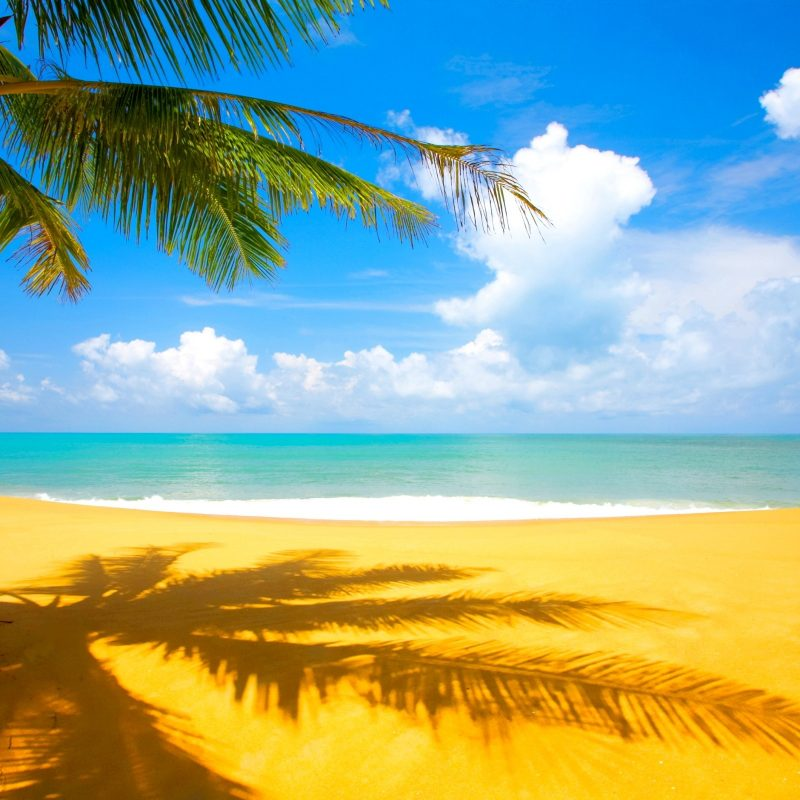 10 Most Popular Beautiful Beach Backgrounds Palm Trees FULL HD 1920×1080 For PC Desktop 2020 free download palm trees beach wallpaper 800x800