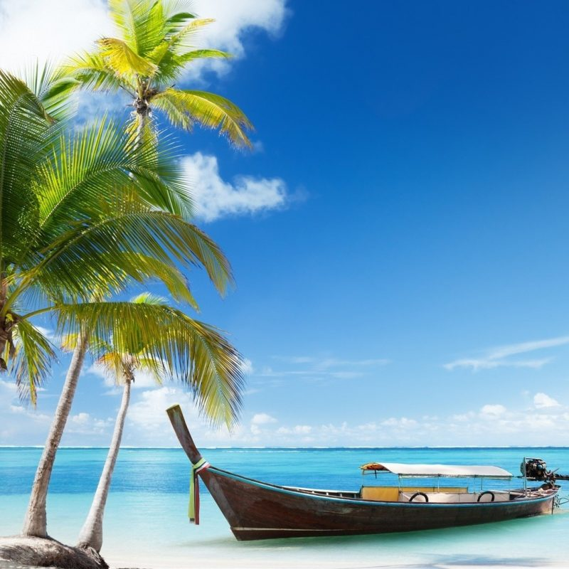 10 Top Beach And Palm Tree Wallpaper FULL HD 1920×1080 For PC Background 2018 free download palm trees beach wallpapers group 84 1 800x800