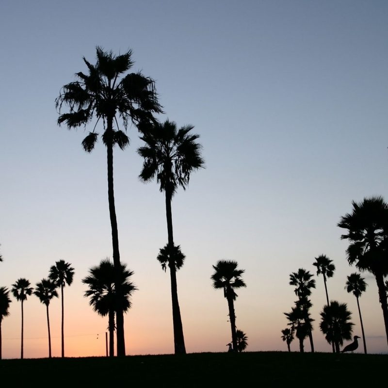 10 Most Popular Palm Trees Desktop Background FULL HD 1920×1080 For PC Desktop 2018 free download palm trees silhouette e29da4 4k hd desktop wallpaper for 4k ultra hd tv 800x800