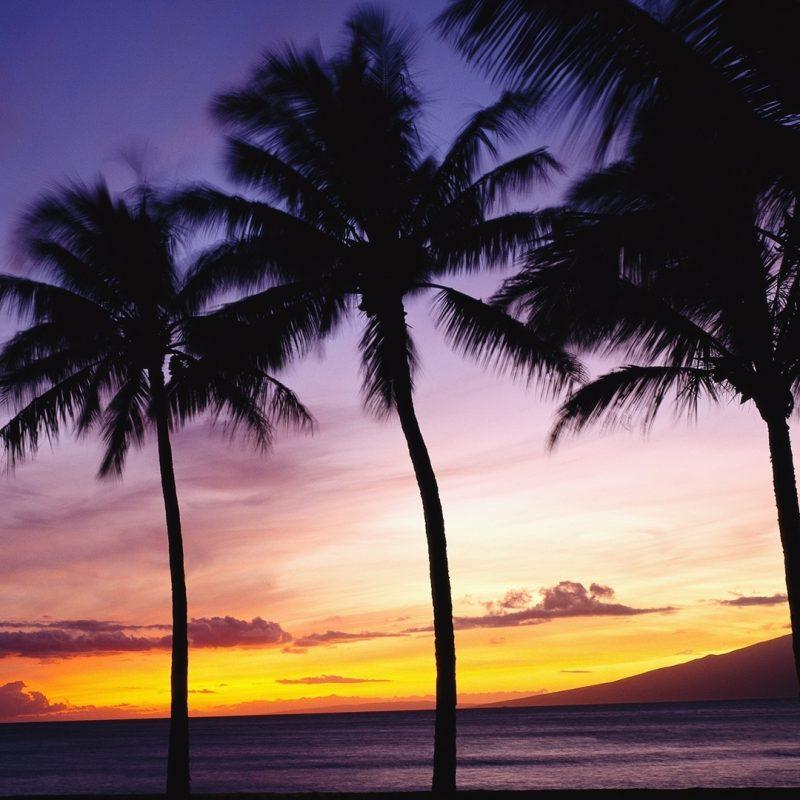 10 Best Palm Trees Desktop Wallpaper FULL HD 1080p For PC Desktop 2018 free download palm trees sunset e29da4 4k hd desktop wallpaper for 4k ultra hd tv 1 800x800