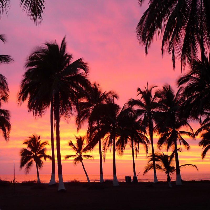 10 Best Palm Trees Desktop Wallpaper FULL HD 1080p For PC Desktop 2018 free download %name