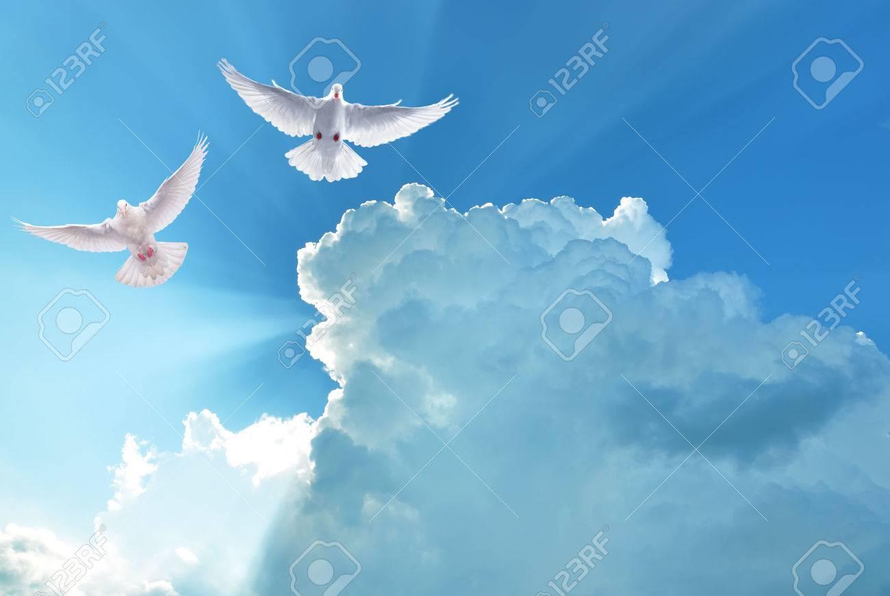 palomas blancas en el cielo azul símbolo de la fe fotos, retratos