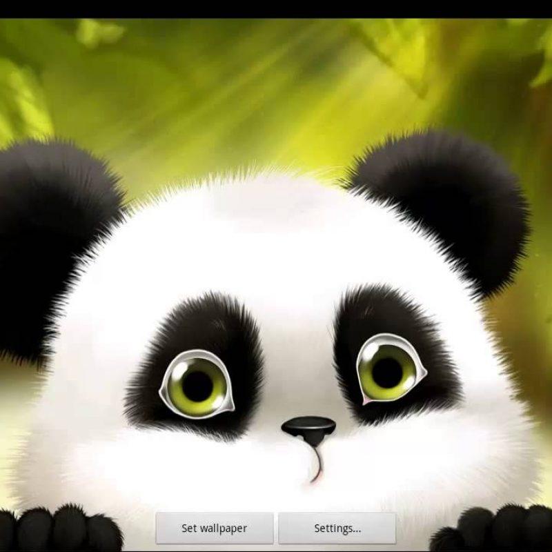 10 Latest Cute Baby Panda Wallpaper FULL HD 1080p For PC Desktop 2020 free download panda chub live wallpaper free video demo youtube 800x800