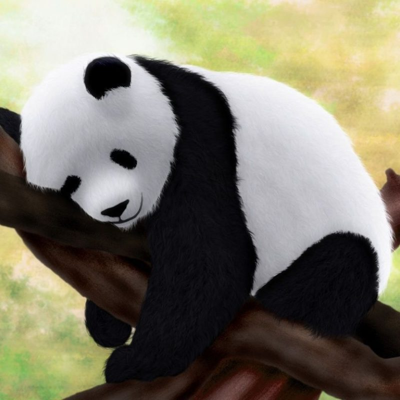 10 Best Cute Baby Panda Images FULL HD 1920×1080 For PC Background 2018 free download panda wallpapers hd images new 1024x768 cute baby panda wallpapers 800x800